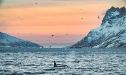 201701-Orcas-Shams-40-uai-1440x961