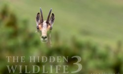 the-hidden-wildlife-3-cover