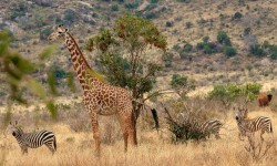 Safari Africa Wilderness Kenya Animal World Nature
