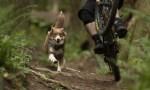 SLorencePhoto_dogs_Emmy_162-1200x675